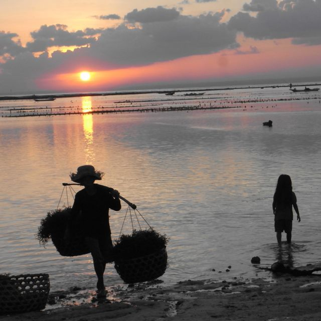 Seaweed farming on Nusa Lembongan is a manual, hard way of life mainly carried out by the older generation.