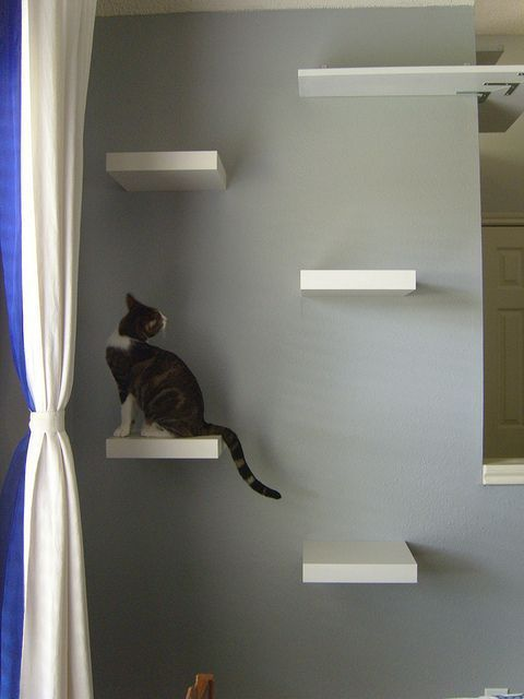 Cat shelves, made with IKEA Lack shelves. I might have to do this in ...