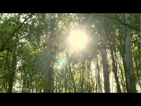 INSIDHERLAND | Four...for luck Center Table Short Film _ Beyond Memory Collection by Joana Santos Barbosa. #INSIDHERLAND #video #nature #sun #woods #trees #clover #centertable