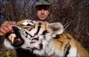 Poacher fined $155,000 for illegal hunting of 6 endangered tigers, and 46 bears
