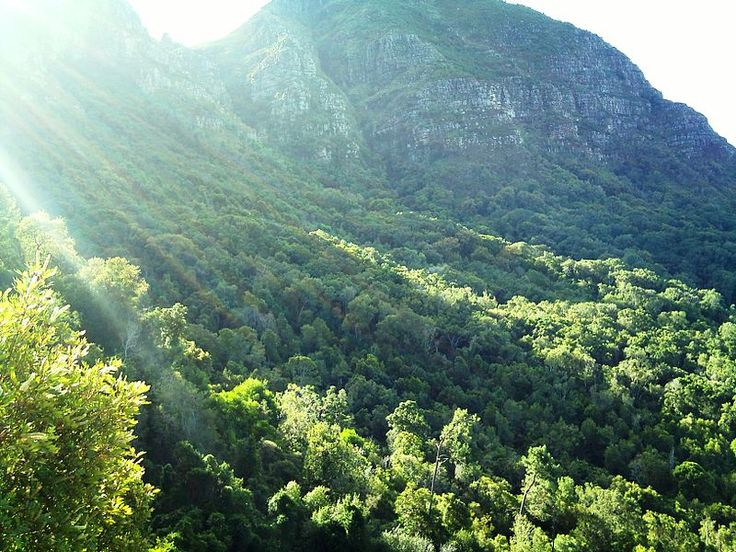 Newlands Forest and Devils Peak - Cape Town