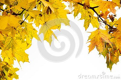 Fall Frame With Yellow Leaves - Download From Over 49 Million High Quality Stock Photos, Images, Vectors. Sign up for FREE today. Image: 79325852