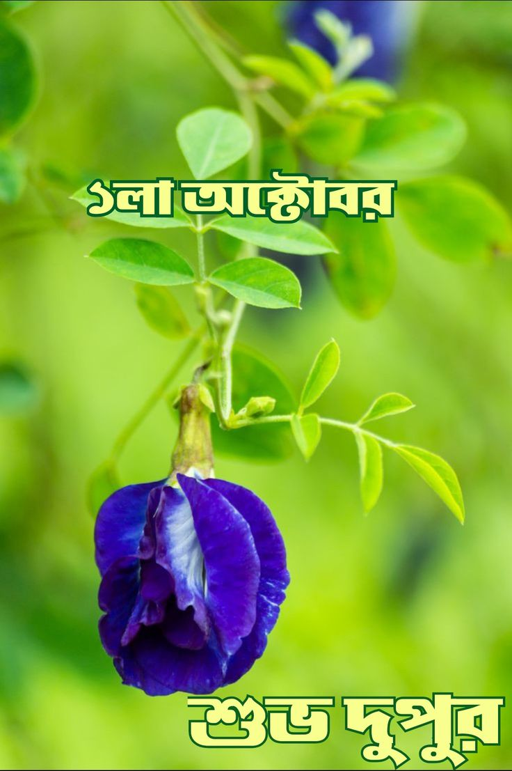 Pin By Blue King On শ ভদ প র In 2020 Plants
