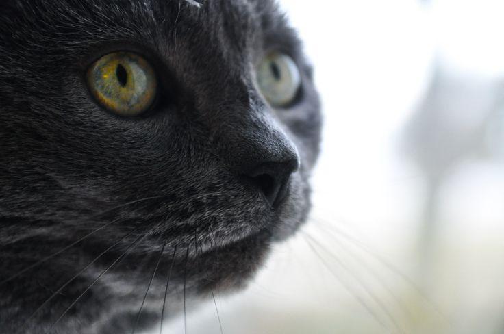 Cat 2.