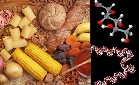 componentes hidratos carbono alimentos