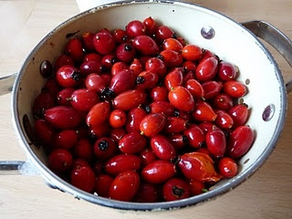 Rosehip Syrup, the tutorial!