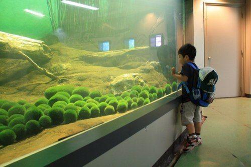 The Custard Cat 커스터드 고양이 My cute little Marimo Fish