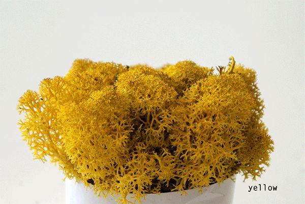 013-yellow
