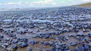 Heboh 4000 Ekor Ikan Kecil Mati Terdampar Di Pantai       Heboh 4000 Ekor Ikan Kecil Mati Terdampar...