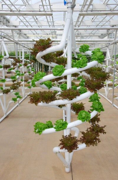 17 Best 1000 images about Aeroponic Gardening on Pinterest Gardens