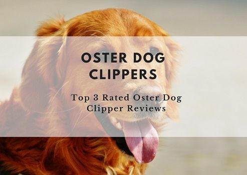 Are Oster dog clippers the best dog clippers on the market? Read our review of Oster dog clippers and find out why Oster dog clippers are considered by many to be the best dog clippers you can buy. #DogClippers