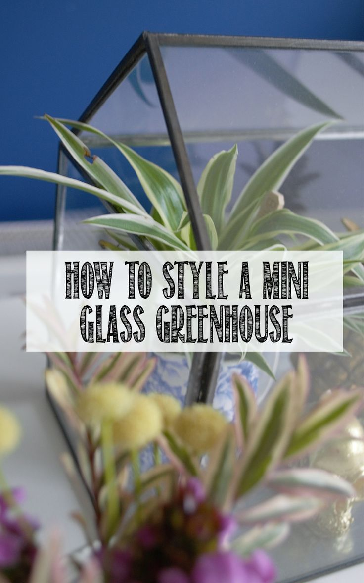 How to style a mini glass greenhouse in 3 different ways. The perfect accessory for a finish touch around the home, and good alternative to a terrarium.