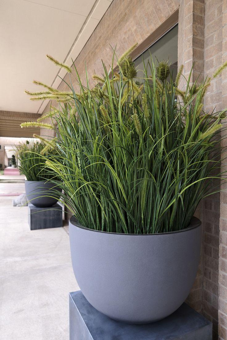 Grassen worden ook meer en meer in pot geplant. Een mooie eyecatcher voor het terras