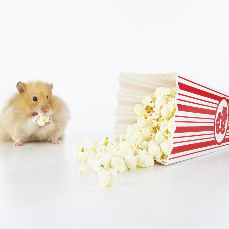 "11 Ways to Watch Movies For Free: Our ears always perk up when we hear the word ""free,"" and movies are yet another freebie all of us love to snag without paying a dime (in addition to books and magazines!)."