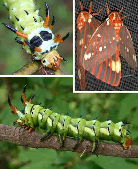 Sounds Dangerous: 10 Insects With Scary Names