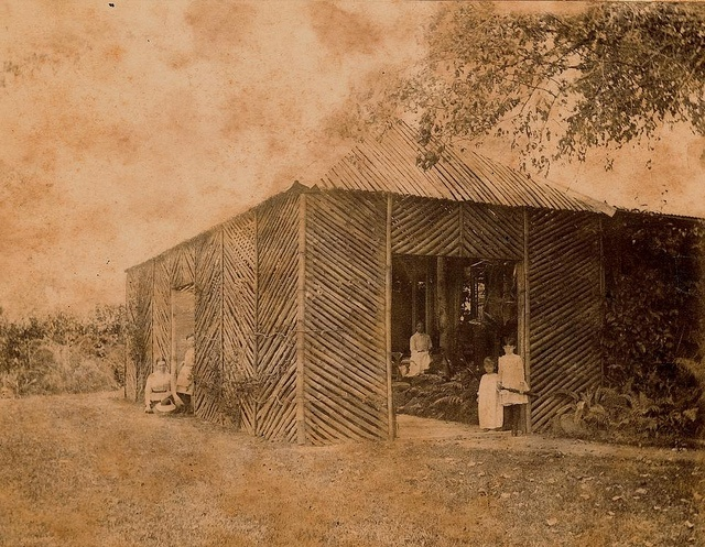 New fernery at 'The Hollow', Mackay, ca. 1877 by State Library of Queensland, Australia, via Flickr