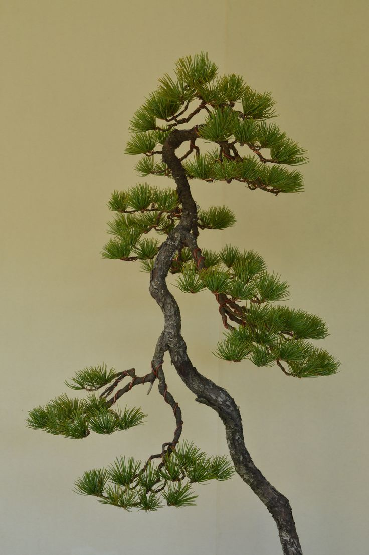 64 best e pictures literati images on pinterest for Literati bonsai gallery
