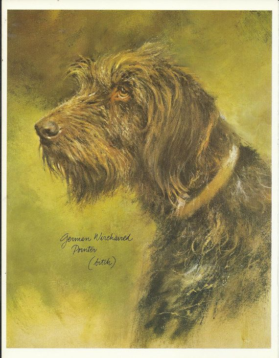 German Wirehaired Pointer by Rien Poortvliet 1983 colour dog print