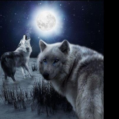 17 Best images about Wolves! :)
