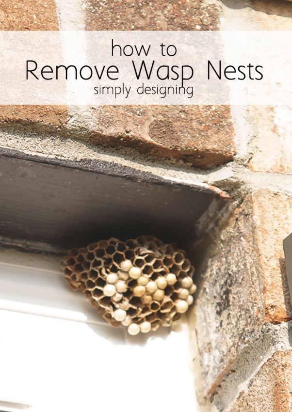 Best 25 wasp removal ideas on pinterest bees and wasps honey best 25 wasp removal ideas on pinterest bees and wasps honey bee removal and worker bee solutioingenieria Image collections