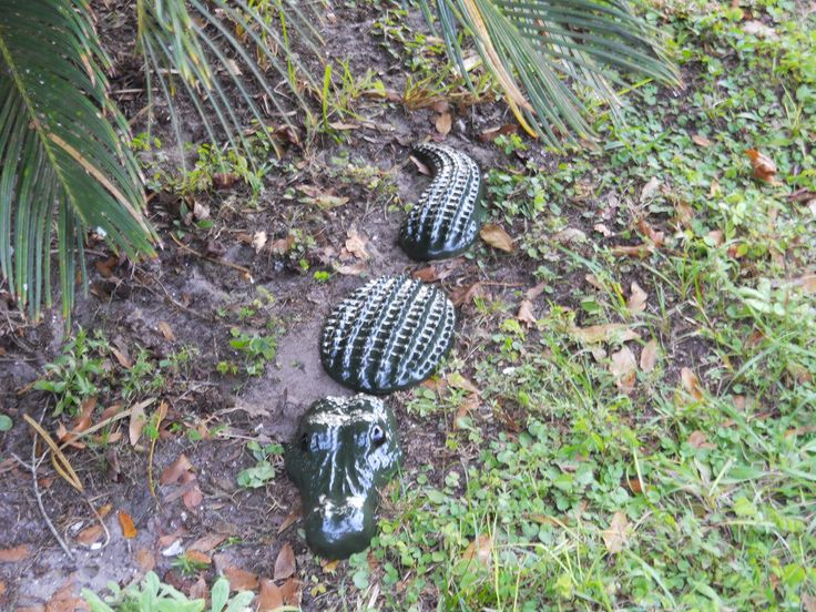 1000 images about alligators on pinterest gardens for Alligator yard decoration
