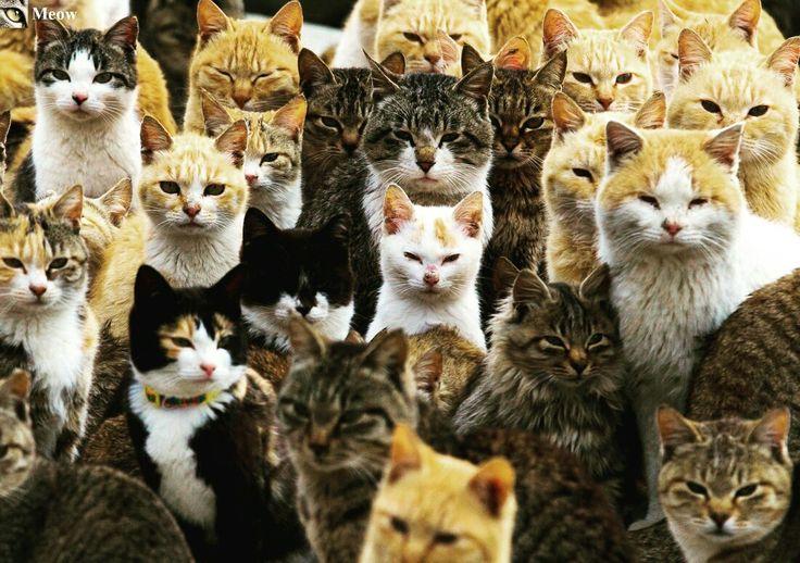 Love to all Cats 😸  https://www.youtube.com/c/WeMeow #cat #cats #wemeow #meow #catlife #cutecat #catlove #lovecats #gatos #gatti #koty #katze #chats #kitty #kitten #kittens #lovecat #funnycat #cateye #beautifulcat #nicecat #amazingcat #catlooking #catofinstagram #catsoftumblr #catstagram #instapets #instacat #pet #pets