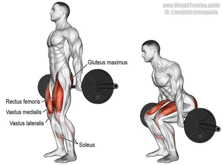 Barbell hack squat. Targets your Quadriceps, while your Gluteus Maximus, Adductor Magnus, and Soleus act as synergists. Sometimes spelled barbell hacksquat.