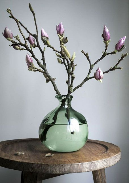 magnolia in flesvaas