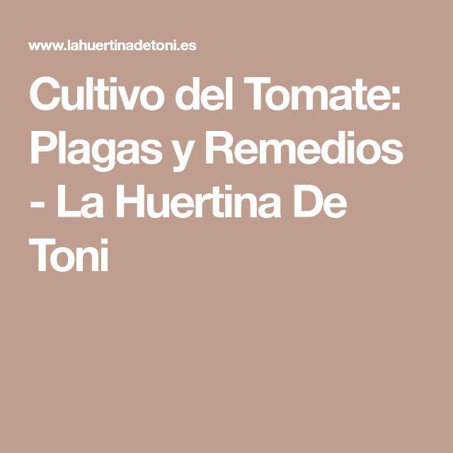 Cultivo del Tomate: #plagas y Remedios - La Huertina De Toni #cultivos