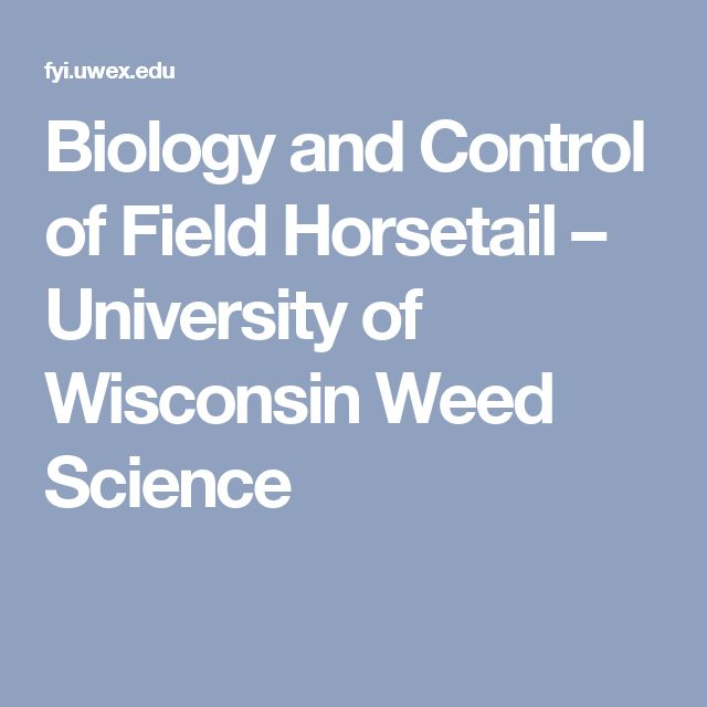 Biology and Control of Field Horsetail – University of Wisconsin Weed Science