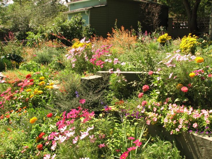 Lush Is Possible With Xeric Gardens | Gardens - Dry Or Xeric | Pinterest | Gardens And LUSH