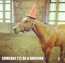 Image result for Funny animal pictures with captions