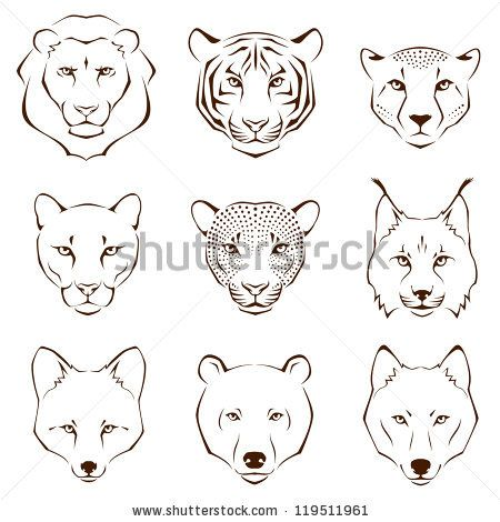set of simple line illustrations showing different facial features of wild animals - lion, tiger, cheetah, cougar, leopard, lynx, fox, bear and wolf by subarashii21, via ShutterStock