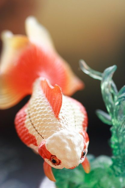 kingyo goldfish