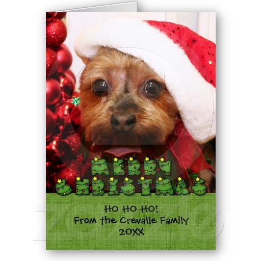 17 Best Images About Yorkies Christmas On Pinterest