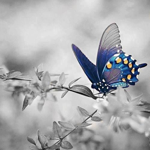 butterfly splash ❤️vanuska❤️