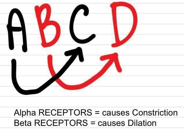Alpha Receptors and Beta Receptors