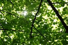 Managing Shady Landscapes: How To Reduce Shade In Lawns And Gardens: Landscape Gardens, Shady Landscape
