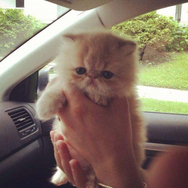 This is exactly what Cookie looked like when we got her!