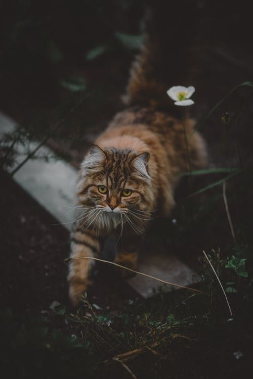 4k Wallpapers Pexels Free Stock Photos Cats Outside Cute Cats Photos Cats