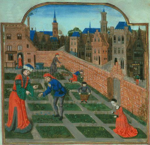pietro de crescenzi - Google Search | Medieval Garden in ...