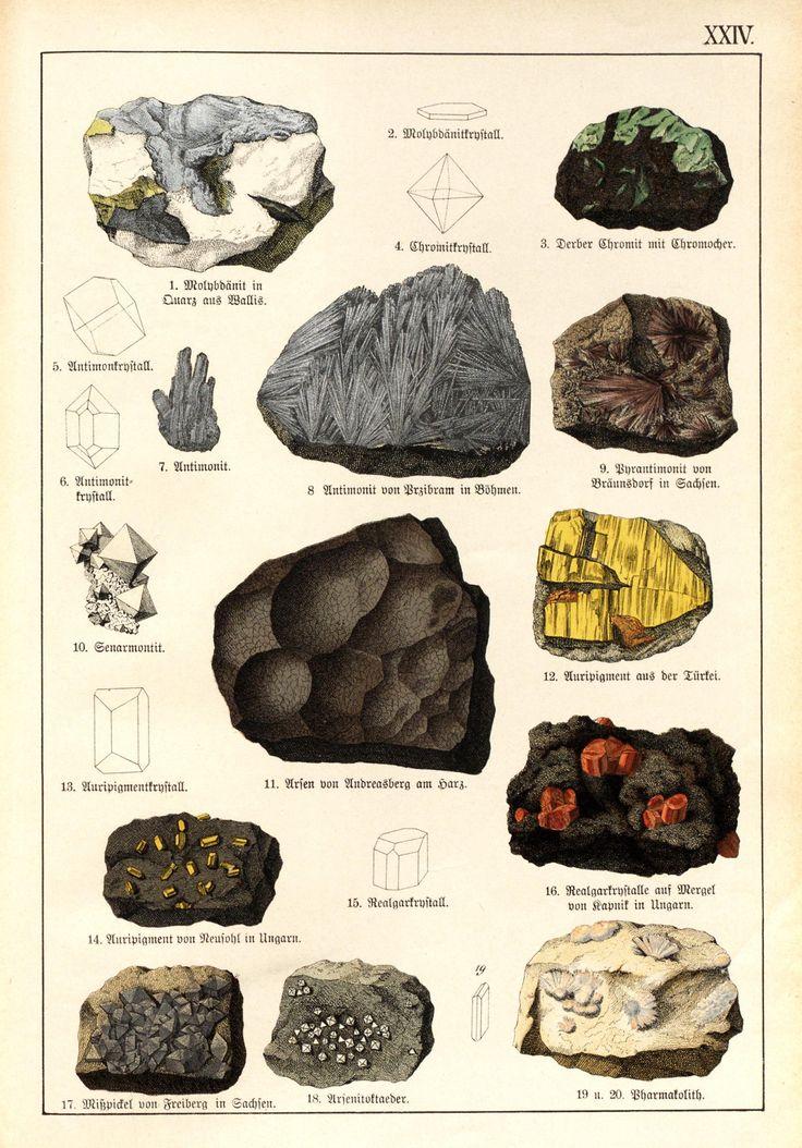 """clawmarks: """" Naturgeschichte des Tier- Pflanzen- und Mineralreichs - 1888 - via Internet Archive """""""