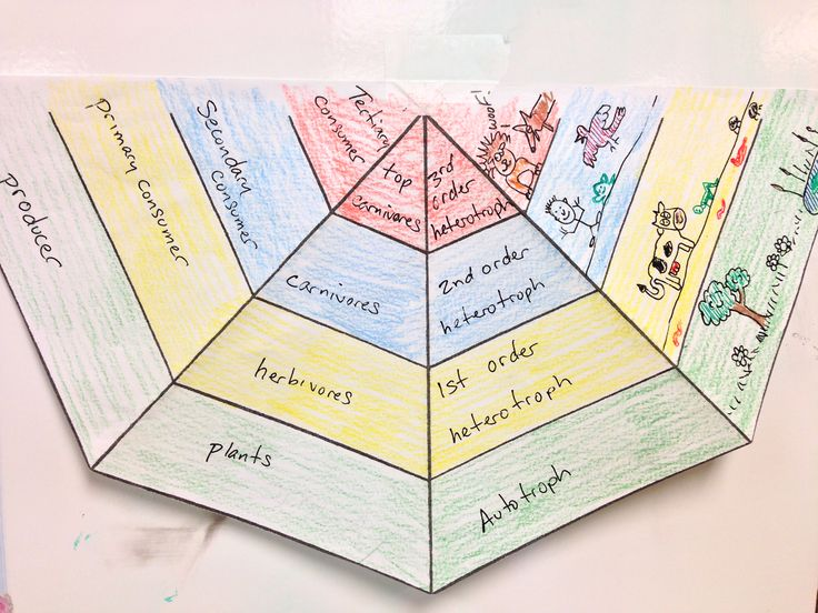 Best 10+ Ecological pyramid ideas on Pinterest | 5th grade science ...