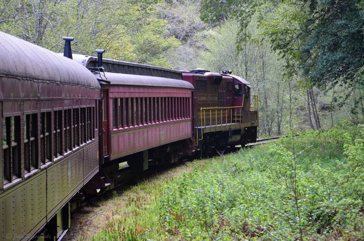 All aboard... Northern California's historic train ride through redwood forests is like nothing else. It is an informative and scenic outing you'll love.