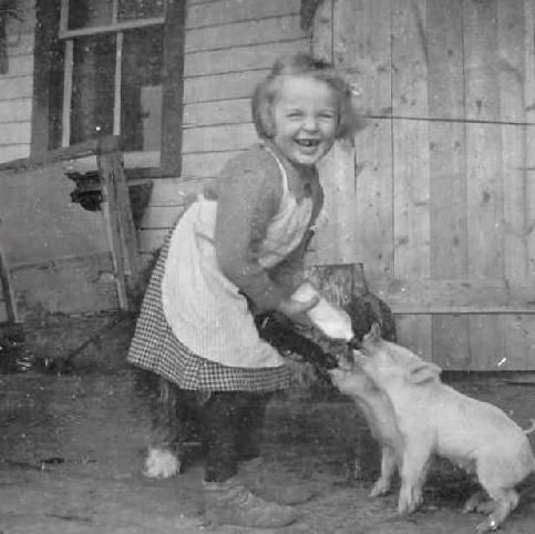 VINTAGE:  Happy little farm girl feeding bottles to her little piglets.