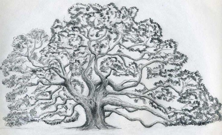 Tree Sketch - Dr. Odd