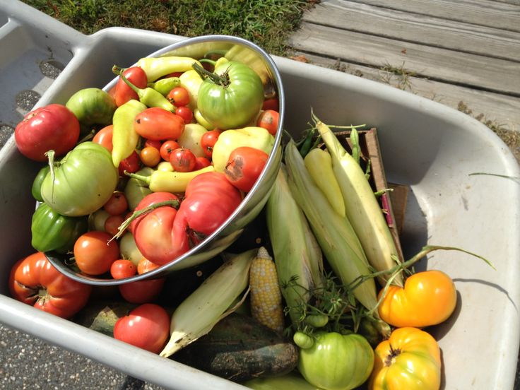Summer fruits of the labor
