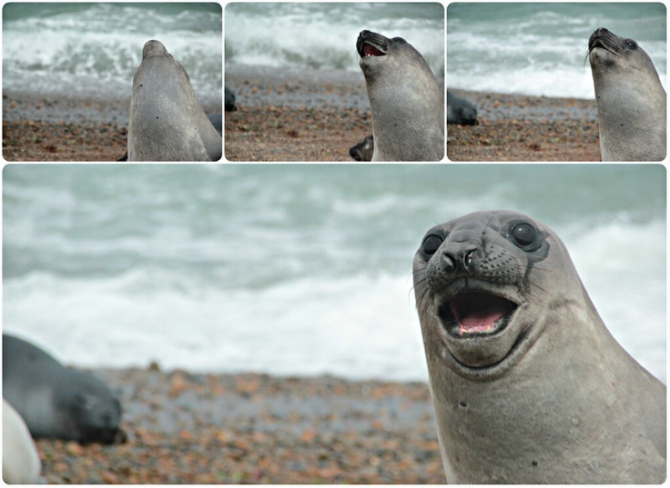 Patagonia seals - photo courtesy of Will Kay (@Storytime_Kay), from his field research work placement in 2012