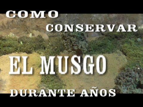 COMO CONSERVAR EL MUSGO PARA EL BELÉN, PESEBRE - PRESERVING THE MOSS