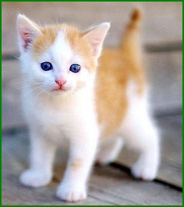 Daftar Nama Nama Kucing Korea Dan Artinya Daftarhewan Com Di 2020 Binatang Lucu Kucing Anak Kucing Menggemaskan